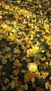 16th Nov 2016 - I Really Did Rake The Leaves