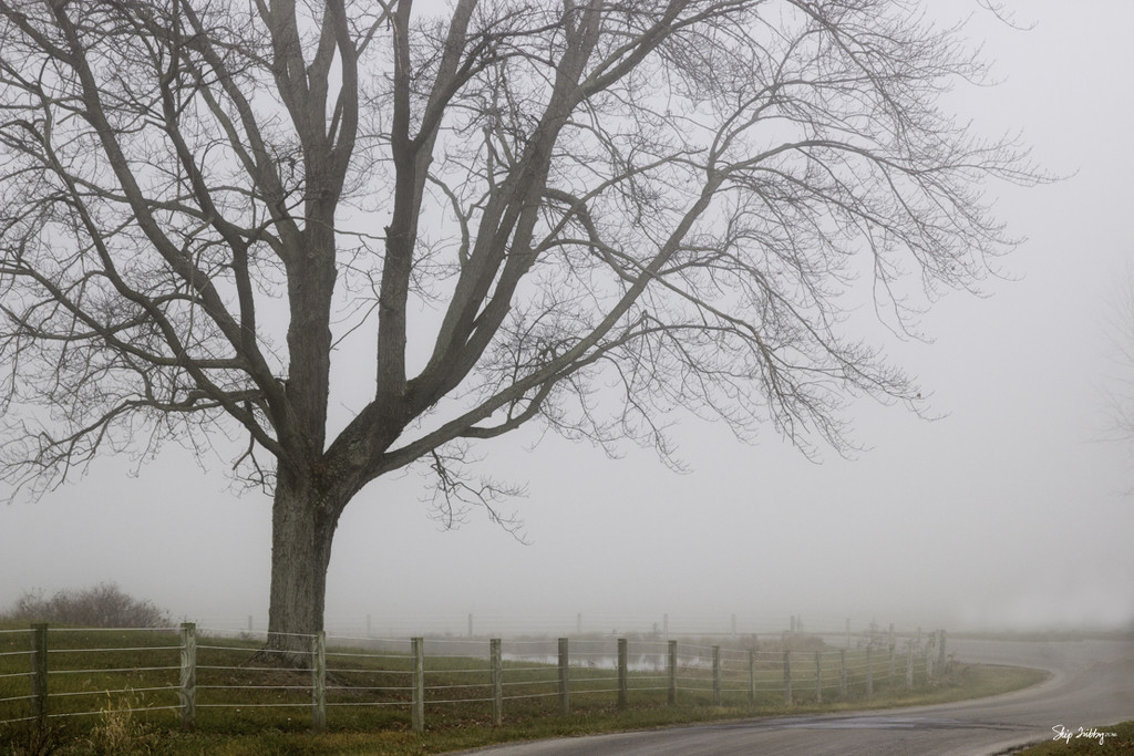 Foggy Morning Ride by skipt07