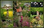 19th Nov 2016 - Bird boxes of the Tauranga Garden and Arts Festival...