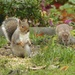Mr Squirrel and his Unwelcome Friend by susiemc
