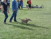 6th Sep 2016 - Dogs and Sticks