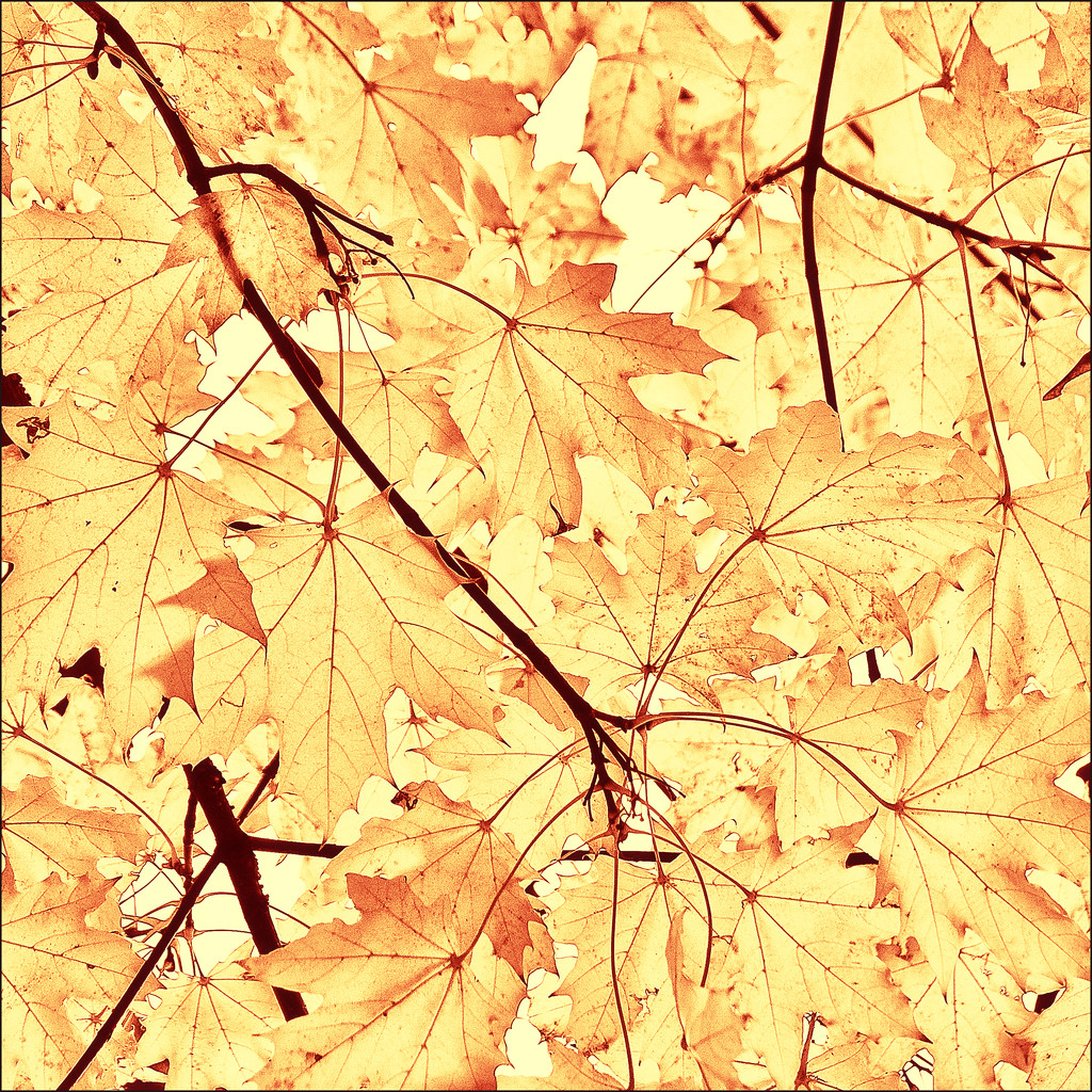 autumn leaves by jerome