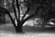 19th Nov 2016 - pinhole apple tree