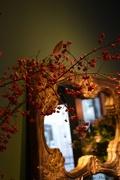 19th Nov 2016 - flowershop