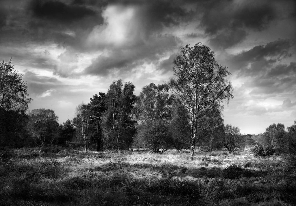 Cannock Chase by lupus