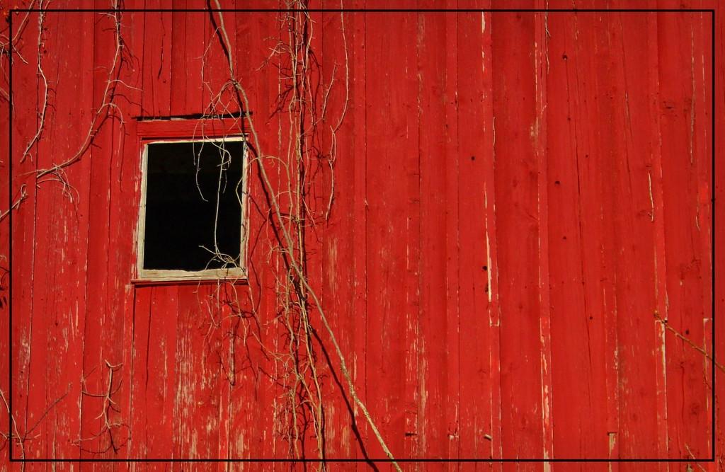 Black Window by olivetreeann