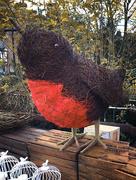 21st Nov 2016 - The Robin Has Landed