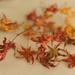 Autumn Leaves 2 by loweygrace