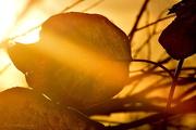 20th Nov 2016 - Beaming Leaf