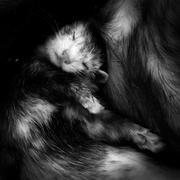 21st Nov 2016 - Sleeping Ferret