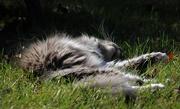22nd Nov 2016 - A ball of fur