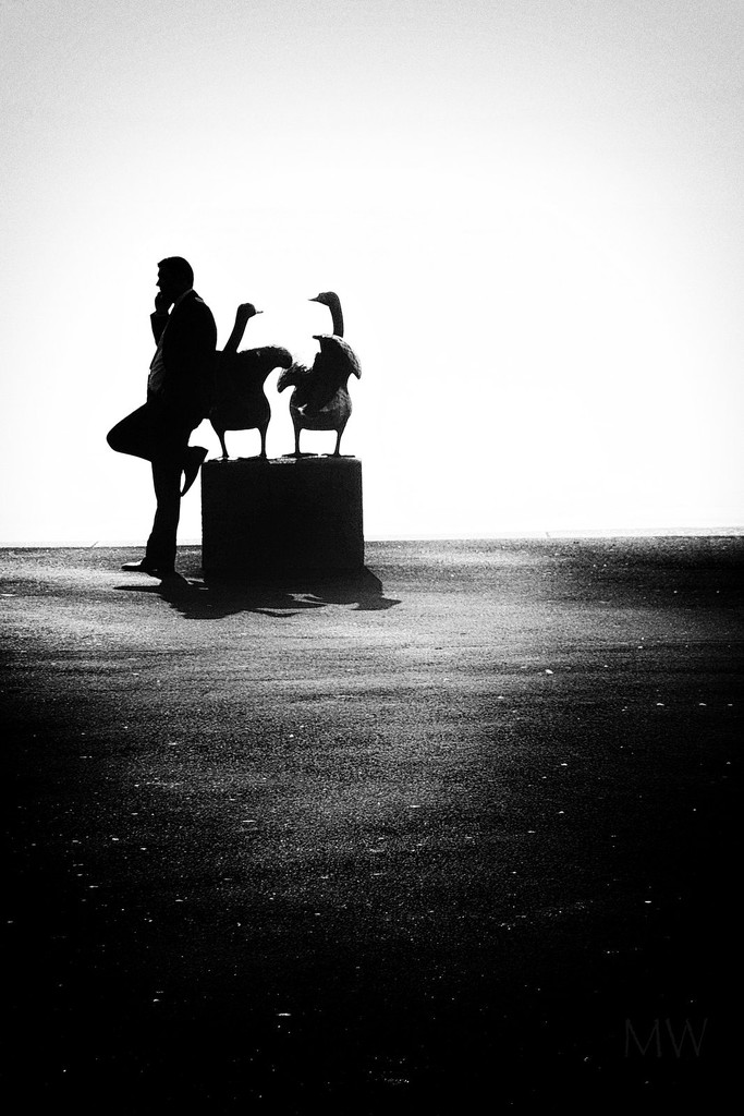 2016-11-22 chit chat with swans? by mona65