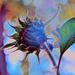 Ready to Blossom by joysfocus