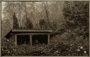 23rd Nov 2016 - Overgrown Home In Sepia