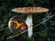 24th Nov 2016 - Psychedelic Mushroom