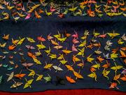 24th Nov 2016 - One thousand origami Cranes