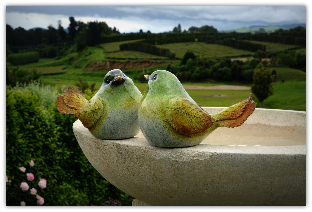 Love birds.. by julzmaioro