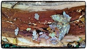 25th Nov 2016 - Leaves on a log - Pretty as a picture!