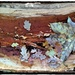 Leaves on a log - Pretty as a picture! by lyndamcg