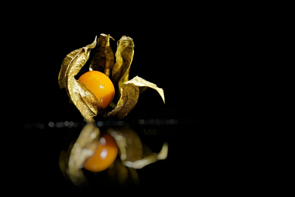 2016-11-25 physalis by mona65