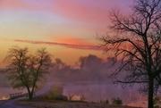 23rd Nov 2016 - misty morning