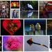 Recent Photo Collage ~ by happysnaps