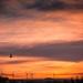 Dolores enjoying the sunset by swillinbillyflynn