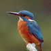 Male Kingfisher-very close by padlock