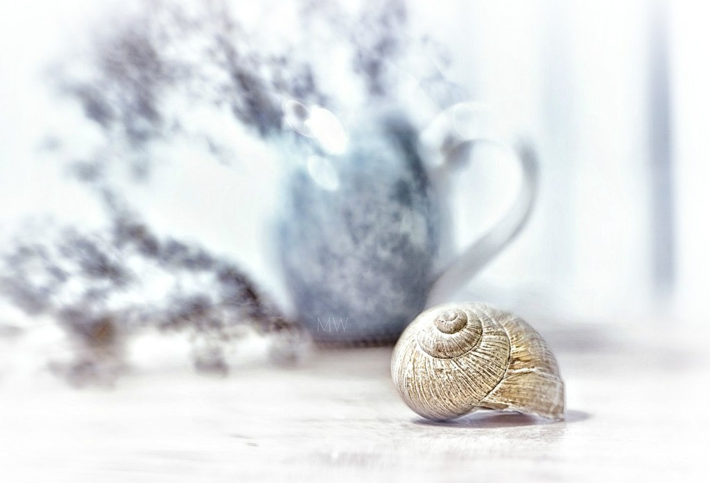 2016-11-26 snail's shell by mona65