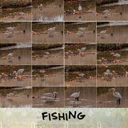 26th Nov 2016 - Fishing