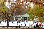 26th Nov 2016 - Skaters on Boston Common