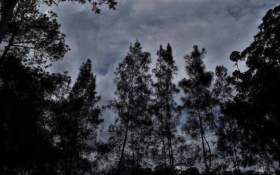 Grey Skies & Tall Trees ~ by happysnaps