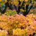 Autumn Leaves by dorsethelen