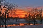 26th Nov 2016 - frosty morn