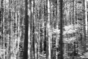 26th Nov 2016 - Through the Woods