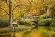 28th Nov 2016 - Japanese Gardens