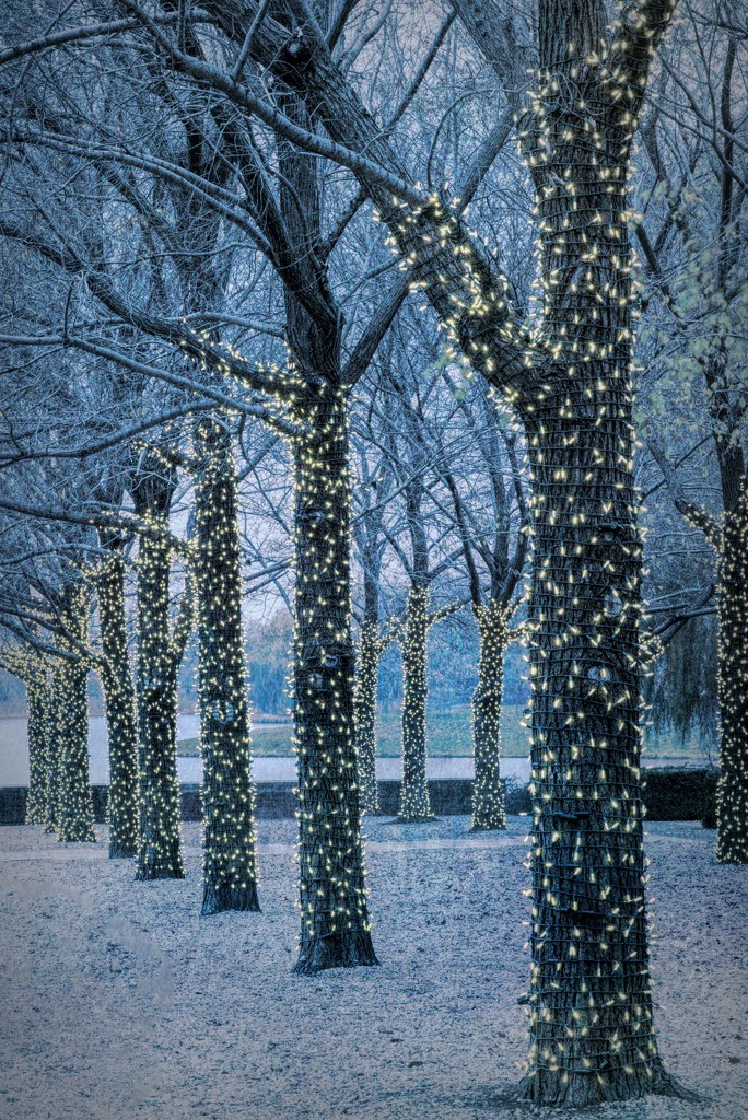 Winter at the Gardens by taffy