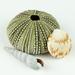 Seashells 13 by jeetee