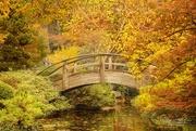29th Nov 2016 - Autumn in the Gardens
