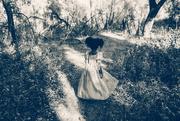 28th Nov 2016 - Wanderer