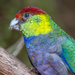Parrot by gosia