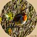 Chubby Robin by carolmw