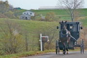 24th Nov 2016 - Amish in Iowa