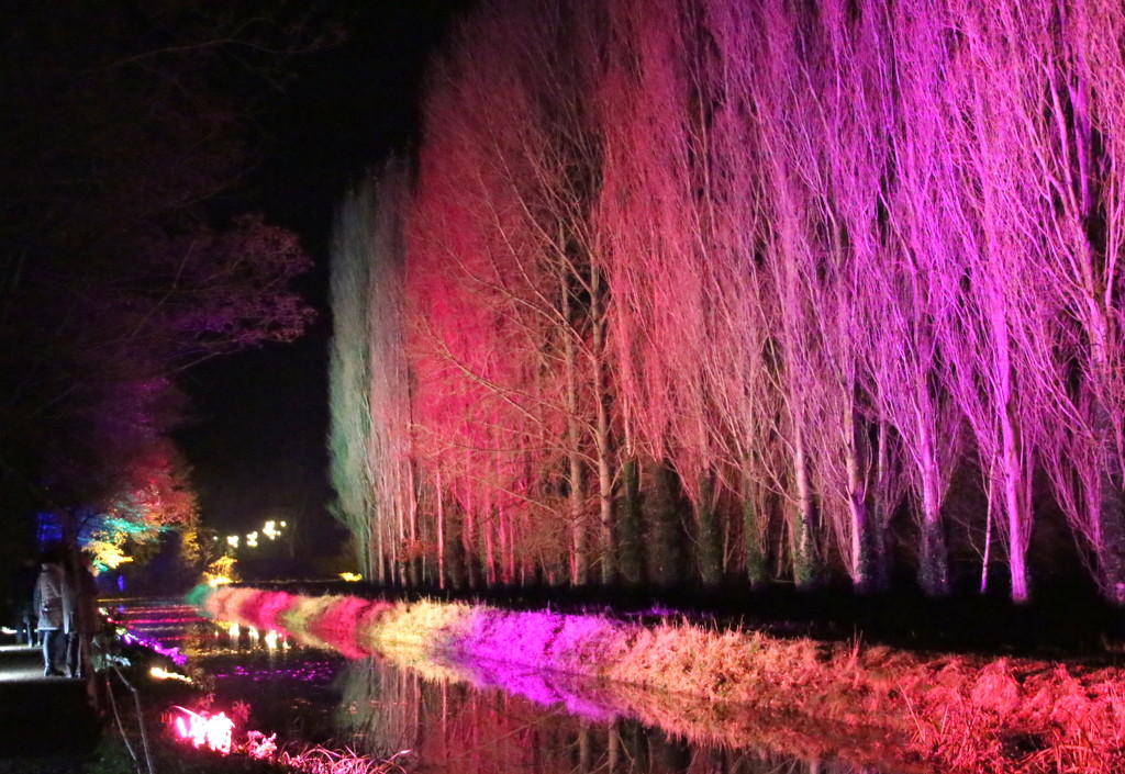 Lighting up the trees by busylady