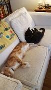 29th Sep 2016 - Cat naps