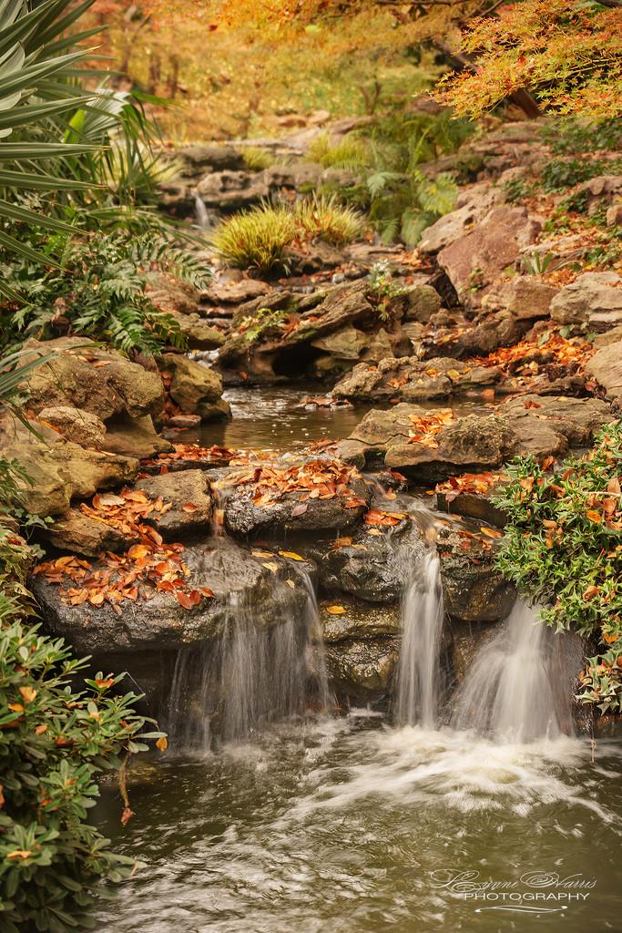 Autumn Falls II by lynne5477