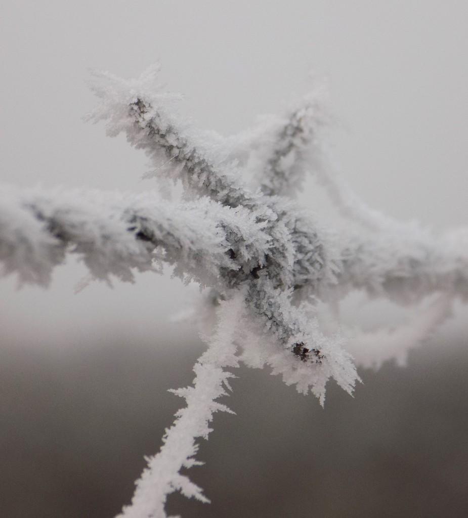 Jack Frost  by flowerfairyann