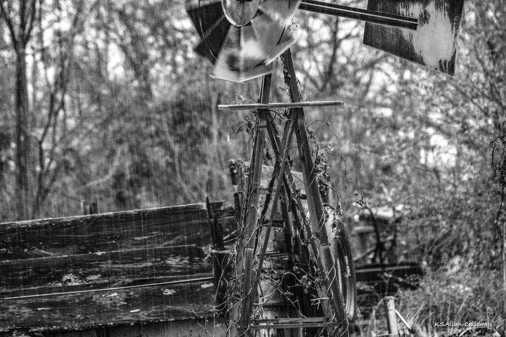 Rain! by randystreat