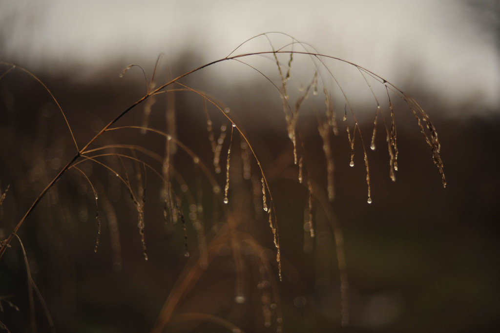 Autumn Rain by loweygrace