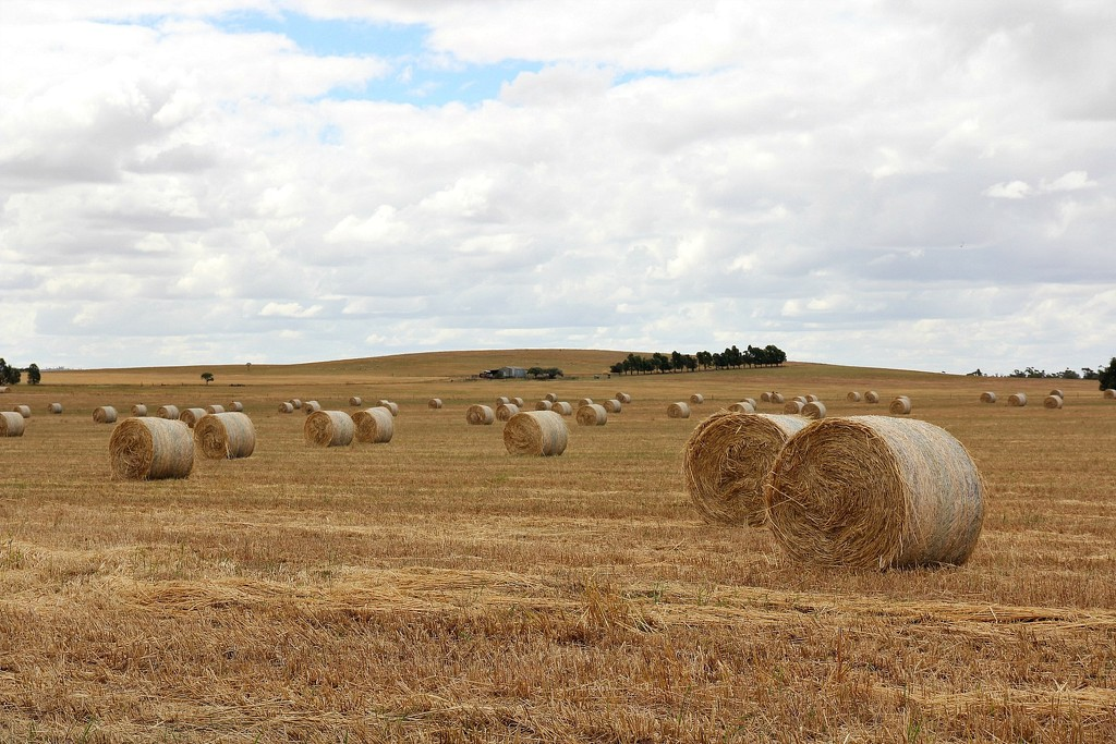 Rolled bales on rolling hills by leggzy